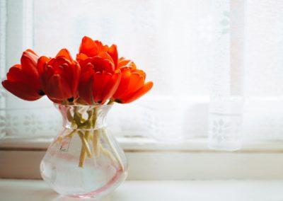 Bunga meja Jogja